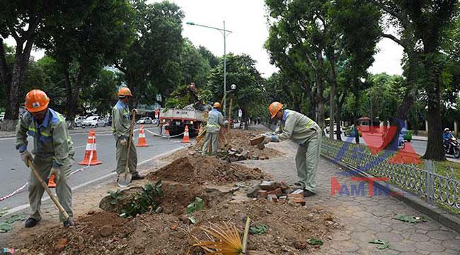 xây dựng trồng cây xanh